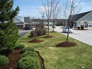 landscaping services new york